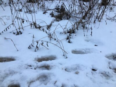 Нижегородская мэрия расторгла концессию на строительство станции снеготаяния