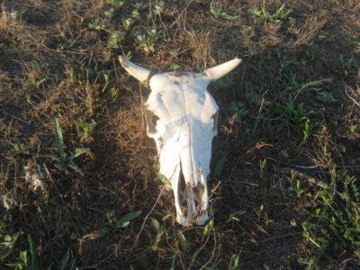 Прокуратура проверяет информацию о стройке на скотомогильнике в Воскресенском районе