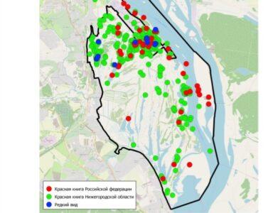 Восточный обход Нижнего Новгорода запланировали в местах скопления краснокнижных птиц