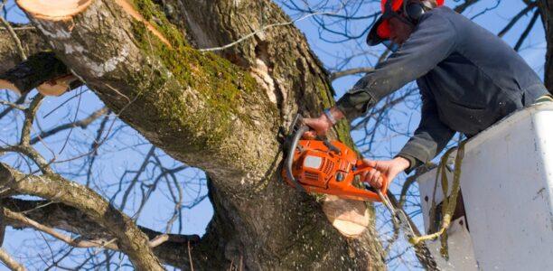 10% высаженных в 2020 году деревьев погибли зимой в Нижнем Новгороде
