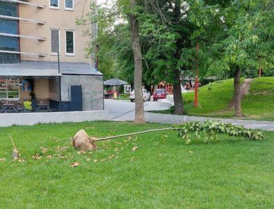 Посаженные в сквере им. Свердлова в 2020 году деревья заменили на новые