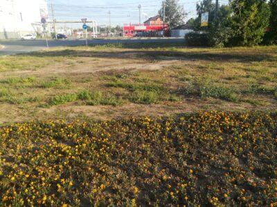 Поливая цветы убивают газон: нижегородцы возмутились нерадивым благоустройством в Московском районе