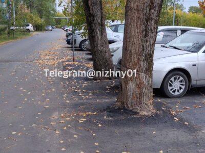 В Нижнем Новгороде оштрафуют подрядчика, заасфальтировавшего деревья на Красных Зорь